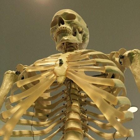 Das Fach Anatomie an der Leipzig Medical School.